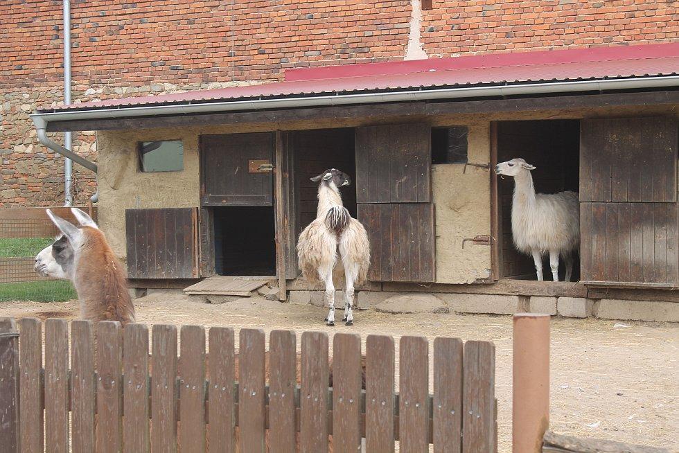 Zoo je otevřená po měsících nuceného uzavření.