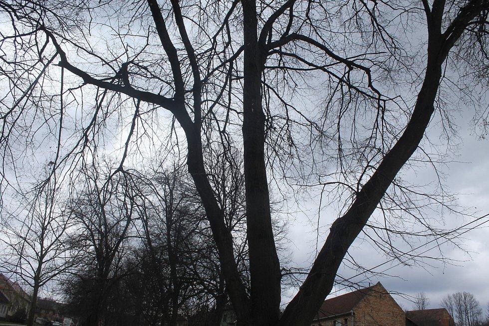 Památné stromy.