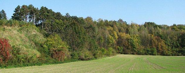Lokalitu Přední Galašek prakticky pohltil okolní les.