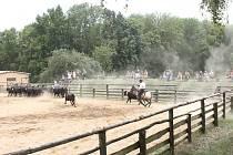 Kovbojové soutěžili na rodeu v rychlostních a dobytkářských disciplínách.