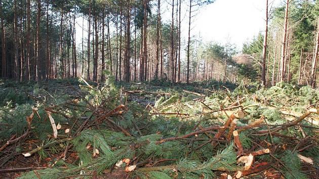 Poškození lesa po přešlé zimě.