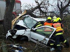 Řidič, do jehož auta zřejmě narazil pták, skončil s autem v pátek krátce po jedné hodině odpolední ve stromě.