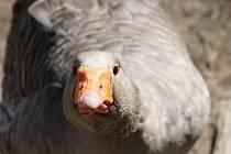 Vyškovská zoo je uzavřená návštěvníkům už více jak měsíc. Život zvířat, tam však plyne dál i bez nich.