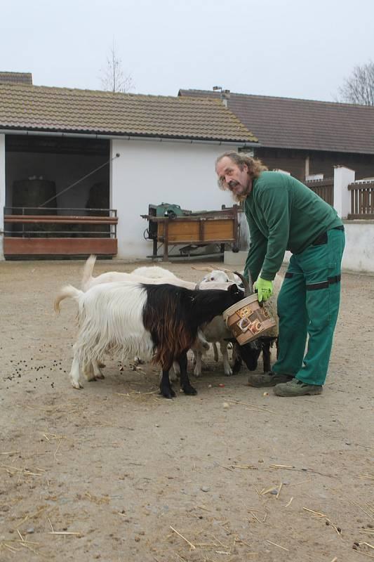 Krmení zvířat v zooparku ve Vyškově před Vánocemi.