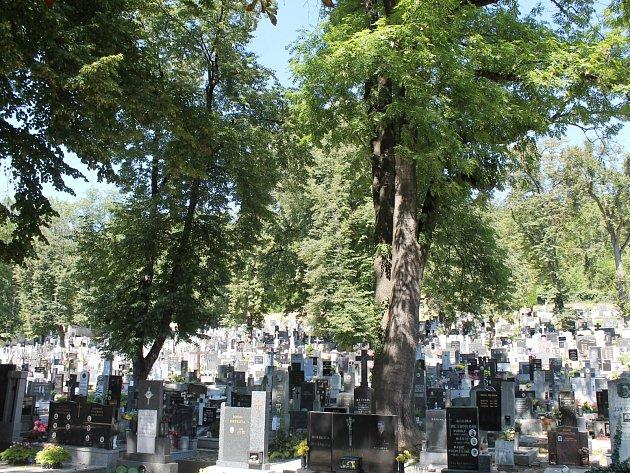 Lidé v Bučovicích si stěžují na vzrostlé stromy. Padají z nich větve a ty mohou poničit hroby.