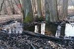 Okolí potoka Rakovec je jedinou lokalitou na Vyškovsku, kde se bledule jarní volně vyskytují v přírodě.