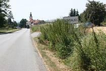 Neposečená tráva u krajnic na Vyškovsku už místy zakrývá značení.