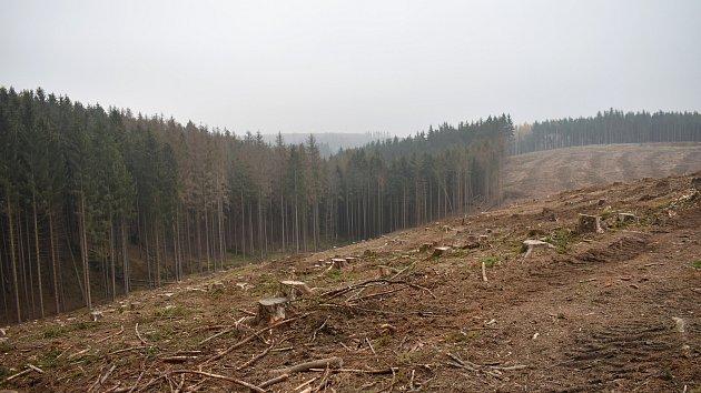 Kůrovec a extrémní sucho zapříčinili obrovskou ztrátu lesů