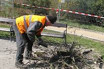 Větve starého javoru ohrožovaly bezpečnost kolemjdoucích, tak je museli prcovníci Vyškovských služeb odřezávat.