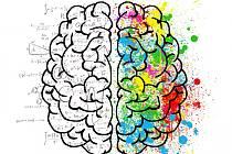 Mozek a trénování mozku. Ilustrační foto