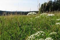 Studnické louky patří společně s přírodní památkou Nad Medlovickým potokem k nejmenším chráněným lokalitám na Vyškovsku. Přesto každého návštěvníka uchvátí svou krásou.