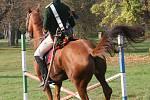 Akce byla náročná pro koně i jezdce.