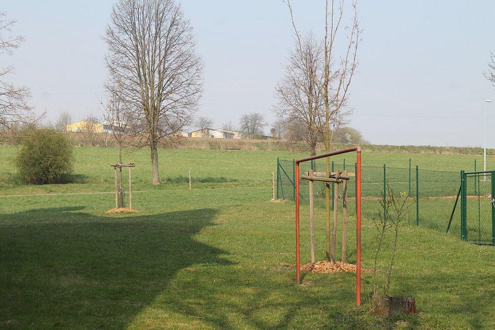 Zeleň v Holubicích.
