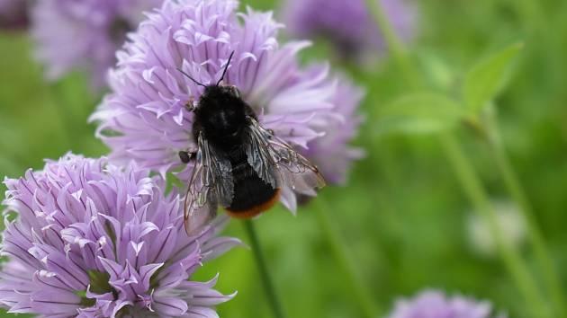 Fascinující svět květin i hmyzu stojí za pozorování a zaznamenání.
