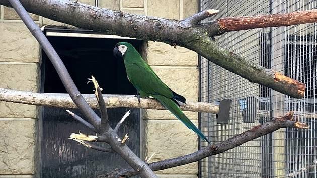 O přirozený odchov ara malého usilovali v zoo deset let.