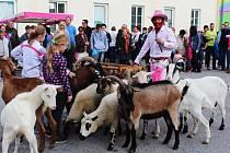 Oranžová s růžovou vládly v sobotu Drysickému dýňobraní. Návštěvníci na něm ochutnali pokrmy z typicky podzimní zeleniny, zjistli, co obnáší práce ovčáka i jak se může zpracovávat ovčí vlna.