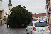 Vánoční strom pro Vyškov dorazil na Masarykovo náměstí.