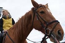 Den koní v Manerově