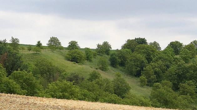 Pohled na přírodní rezervaci Visengrunty u Bošovic. Teplá a suchá stepní lokalita je zarostlá zčásti ořešáky a ovocnými stromy.
