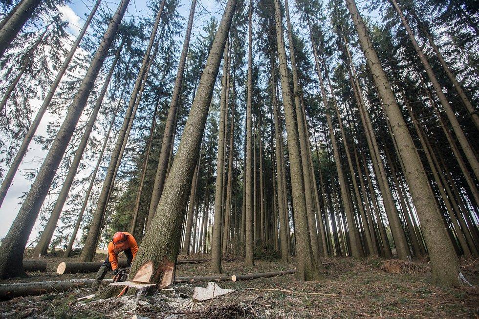 Kácení stromů.