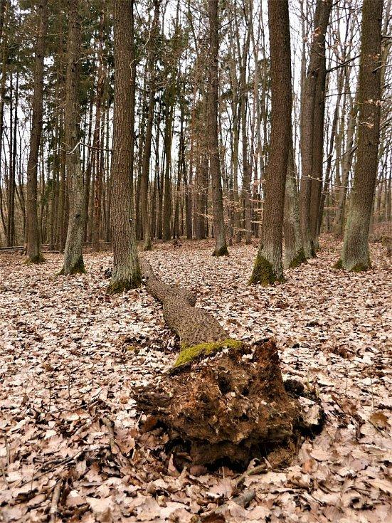 Vyškovsko z ptačí pespektivy. Na snímku okolí Drnovic.