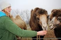 Pohladit si a nakrmit zvířata, ke kterým se běžně nedostanou, mohli v sobotu návštěvníci vyškovského zooparku. Následně se zahřáli v Hanáckém statku při sledování živého betlému.
