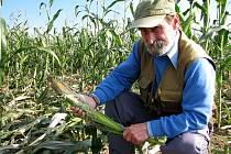 Alfred Hanik ukazuje zničené kukuřičné pole u Ruprechtova.
