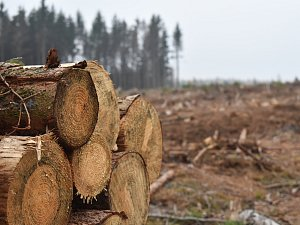 Kůrovec a extrémní sucho zapříčinili obrovskou ztrátu lesů na jihu Moravy. Ty se navíc podle odborníků stávají pro veřejnost nebezpečnými.