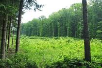Partie Ždánického lesa poblíž místa zvaného U Zabitého.