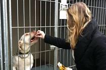 Darované krmení vystačí psím a kočičím obyvatelům útulku v Rousínově na půl roku.