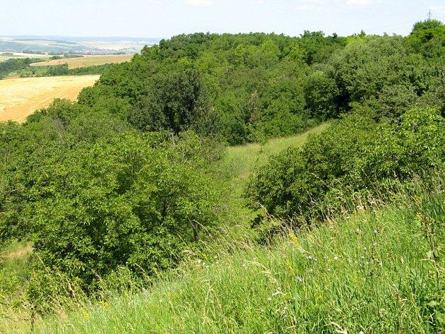 Zbytky stepi se zachovaly vlokalitě Visengrunty uBošovic na Vyškovsku. Žijí tam vzácné druhy rostlin a živočichů, které milují sucho a světlo.