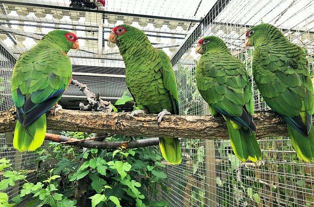 Vpapouščí zoo nyní provozují stovku expozic.