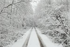Dne 6. ledna pokryl sníh Drahanskou vrchovinu, na snímku Olšanský les.