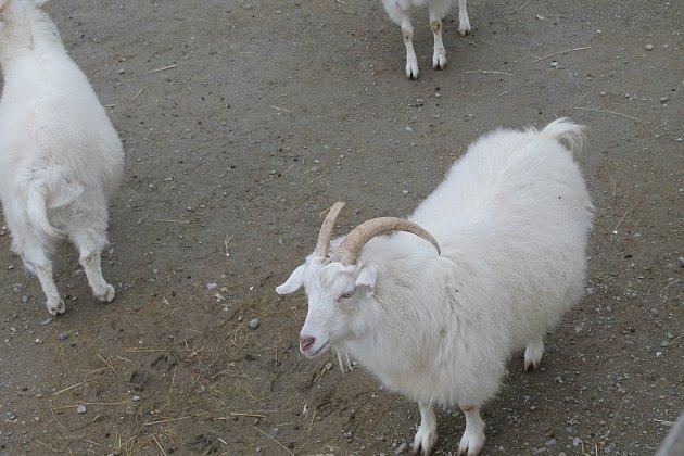 Zvířata ve vyškovském zooparku.