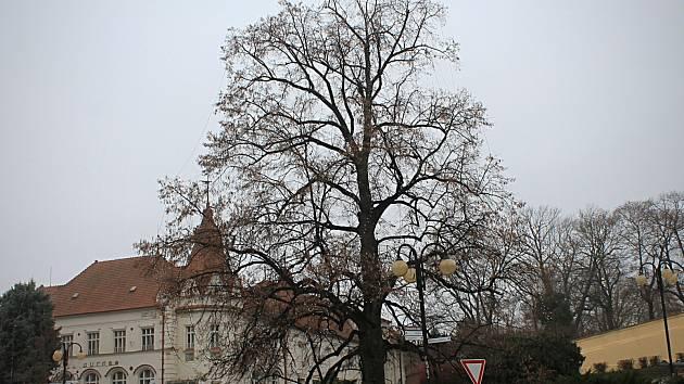 Zářící lípa ve Slavkově vyvolala vlnu kritiky, město zareagovalo nazdobením smrku.