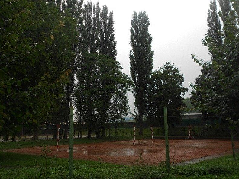 Dnes už pokácené stromy v lokalitě sportovišť ve vyškovské místní části Dědice.