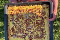 Recept na rebarborový koláč je jednoduchý.