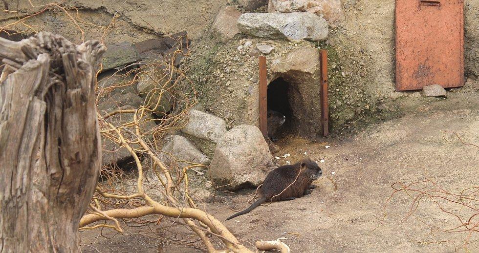 Zvířata jsou v zoo na pozornost zvyklá.