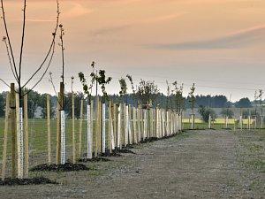 Výsadba nových stromů. Ilustrační foto