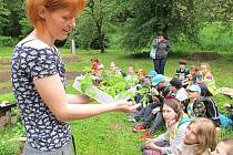 Děti společné zahradničení baví, ale nyní si každý může vypěstovat zeleninu v truhlíku za oknem. Ilustrační foto.