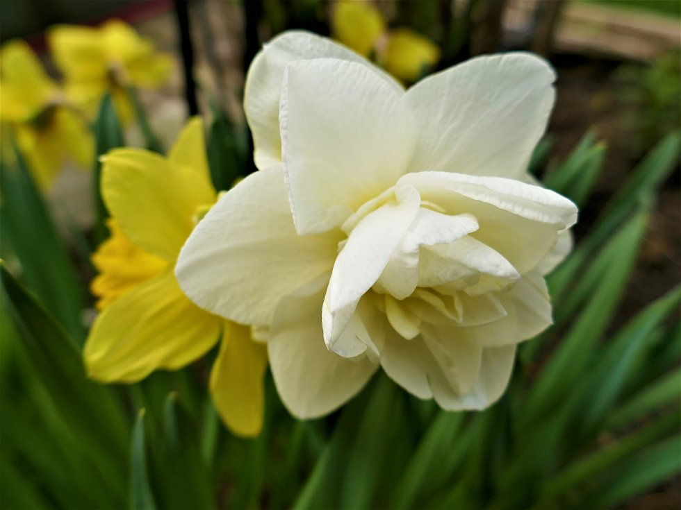 Jarem vonící zahrada i stromy v plném květu lákají k pobytu venku i focení.