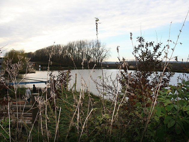 V Lysovickém rybníku uhynuly dva tisíce pstruhů.
