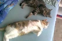 Soňa Rajtrová začala opět věřit, že si své kočky odvede domů.