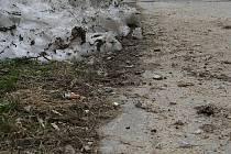 Vyškovské chodníky jsou po zimě plné odpadků.
