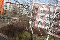Vzrostlé břízy zastiňují byt Milana Klimeše na sídlišti Zlatá Hora ve Slavkově u Brna.