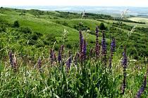 RÁJ PRO BOTANIKY. Větrníky jsou nejvýznamnější přírodní památkou Vyškovska.