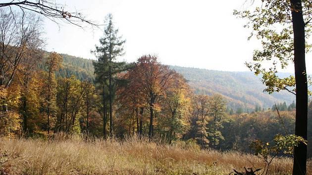 Košaté buky, rozložité duby a špičaté modříny. Tak vypadá typická partie Ždánického lesa poblíž Červeného kříže.