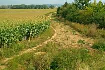 Polní cestu po zpevnění využijí chodci i cyklisté.