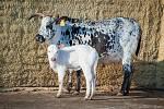 V prosinci se ve vyškovské zoo narodilo několik mláďat.