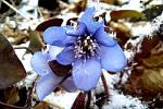 Začátek jara byl pokrytý v Mokré na Brněnsku sněhem.
